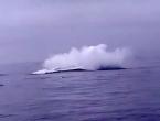 'Poklopio' ih 40 tona težak kit, preživjeli da pričaju o tome