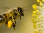 Znanstvenici otkrili tajnu moći malih mozgova pčela