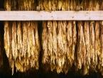 Ljudi su koristili duhan prije 12.300 godina
