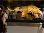 Znanstvenici otkrili: Mamute nisu istrijebili ljudi