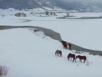 Pogledajte snimak livanjskih divljih konja snimljenih iz zraka