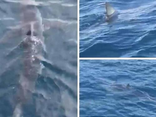 U Makarskoj snimljen morski pas