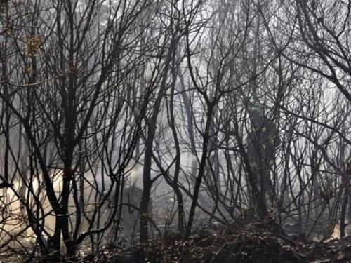 Kiša ugasila požar na Dinari u BiH koji je 20 dana palio sve pred sobom