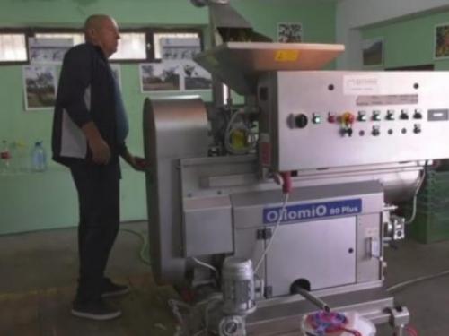 VIDEO  Počela berba maslina u Hercegovini