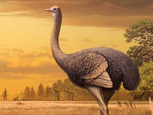Kod Crnog mora otkriveni ostaci divovske prethistorijske ptice