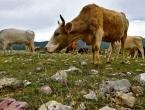 Federalno ministarstvo poljoprivrede poziva na pojačanu kontrolu životinja