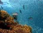 Pronađen veliki koraljni greben u blizini SAD-a