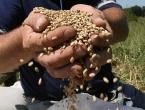 Rusi tvrde da su im sankcije razvile poljoprivredu