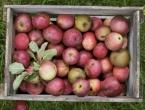 Trik s kojim će jabuke 'izdržati' cijelu zimu