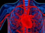 Srca muškaraca su u lošijem stanju od ženskih