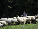 Pastiri jesu traženi, ali plaća od 1.200 KM je mit
