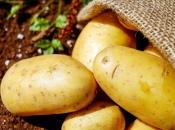 Naglo pala cijena hercegovačkog krumpira