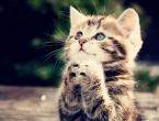 Mačke vole ljude više od hrane i umjetnih miševa