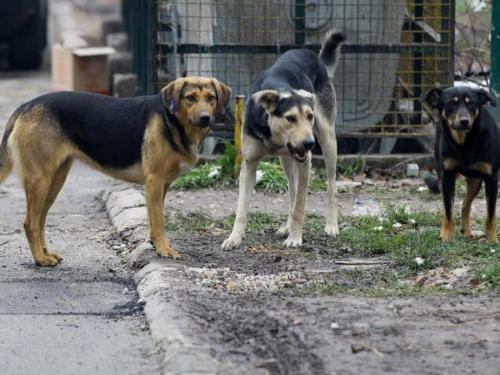 Netko masovno truje pse po Jablanici