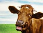 Problemi novih tehnologija - Hakeri zaustavili proizvodnju mlijeka
