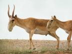 Grom ubio 350 ugroženih životinja