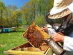 U BiH se počeo razvijati pčelarski turizam