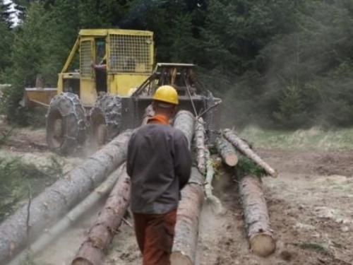 ''Hercegbosanske šume'': Sud zabranio aktivnosti i natječaje