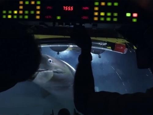 Pogledajte napad golemih morskih pasa na podmornicu