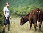 Napustio Ameriku kako bi se posvetio kravama