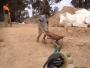 Video: Smiješne nezgode na gradilištima
