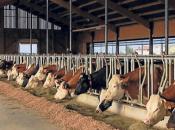 Domaće svježe mlijeko stiže i na kućni prag, poticaji isplaćeni i za 15 malih kupreških mljekara