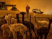 Požari ubili 480 milijuna životinja