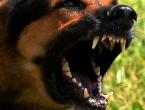 U Banja Luci pas ubio čovjeka