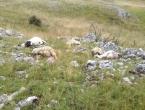 U grmljavinskome nevremenu stradale ovce i janjci na Farmi Smiljanić