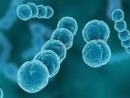 Bakterije u ljudskim crijevima stare najmanje 15 milijuna godina