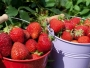 S livade ukrali skoro pola tone jagoda