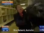 Novinara preplašio pijetao, iz kadra je nestao uz trk i vrisak