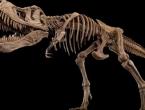 Farmer otkrio još jednu vrstu tiranosaura, stariju i od T-Rexa