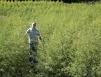 Petar jedini u Hercegovini uzgaja slatki pelin