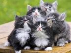 Selo koje želi zabraniti mačke