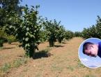 Mladi poljoprivrednik iz Tomislavgrada ima 350 sadnica lješnjaka na 6 duluma i samo 20 godina