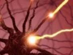 Muški mozak programiran da daje prednost seksu pred hranom