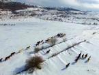Tomislavgrad: Apel za pomoć divljim konjima