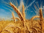 Poljoprivrednici Vladi HBŽ-a: Poticaji ili blokade