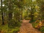 Trogodišnja djevojčica preživjela 11 dana u sibirskoj šumi