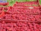BiH 'ozbiljan igrač' u proizvodnji jagodičastog voća
