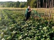 Bugojanka se nakon teškog perioda okrenula poljoprivredi: Treba biti optimist