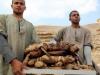 Novootkrivene grobnice u Egiptu: Pronađene mumije mačaka i statue životinja