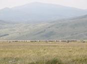 Alarmantno na Kupresu, Glamoču i Livnu: Sedam osoba zaraženo brucelozom