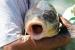 FOTO/VIDEO: U Ramskom jezeru uhvaćen šaran kapitalac od 28,4 kg