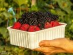 NAJAVA: Predavanje o suvremenom uzgoju malina
