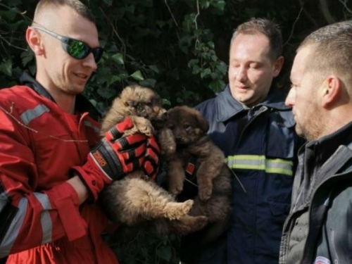 Lijepa priča: Dobri ljudi uložili ogromne napore da iz kanjona Neretve spase psiće