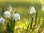 Stiže proljeće, dolazi nam desetak sunčanih i toplih dana