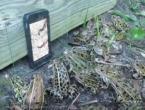 Žabe navalila na snimku crva
