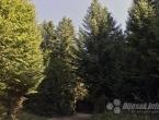 U Federaciji smanjenje proizvodnje i prodaje šumskih sortimenata